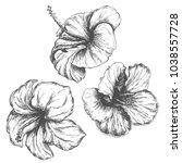 tropical hibiscus flower set ... | Shutterstock .eps vector #1038557728