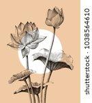 lotus flower hand drawing... | Shutterstock .eps vector #1038564610