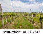 green spring vine yards... | Shutterstock . vector #1038579730