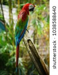 the parrot in the safari world... | Shutterstock . vector #1038588640