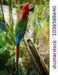 the parrot in the safari world... | Shutterstock . vector #1038588640