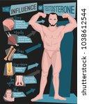 testosterone influence... | Shutterstock .eps vector #1038612544