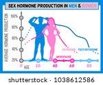 sex hormone production in men...   Shutterstock .eps vector #1038612586