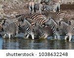 herd of zebras at a waterhole... | Shutterstock . vector #1038632248