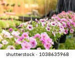 flowerbed with multicoloured... | Shutterstock . vector #1038635968