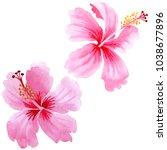 wildflower hibiscus pink flower ... | Shutterstock . vector #1038677896