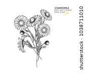 hand drawn wild hay flowers....   Shutterstock .eps vector #1038711010
