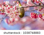 the japanese white eye.the... | Shutterstock . vector #1038768883