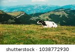 cows in a meadow in the alps ... | Shutterstock . vector #1038772930