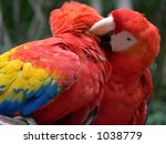 colorful ara parrots   Shutterstock . vector #1038779