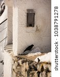 Small photo of alpine chough sitting on a wall below a birdhouse