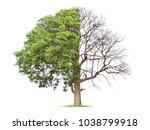 concept of doubleness. dead... | Shutterstock . vector #1038799918