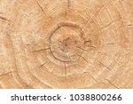 wood texture of cut tree trunk. ... | Shutterstock . vector #1038800266