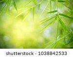 closeup nature view of green... | Shutterstock . vector #1038842533