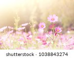 soft and blur cosmos flowers... | Shutterstock . vector #1038843274