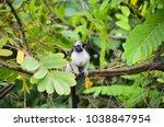 wild life in panama  small... | Shutterstock . vector #1038847954