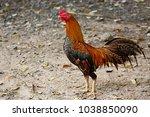 rooster in farm  | Shutterstock . vector #1038850090