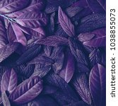 creative tropic purple leaves... | Shutterstock . vector #1038855073