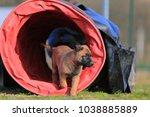 puppy belgian shepherd   Shutterstock . vector #1038885889