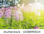 magic pink rhododendron flowers ... | Shutterstock . vector #1038890014