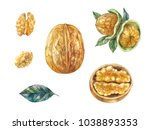 watercolor nuts in shell.... | Shutterstock . vector #1038893353