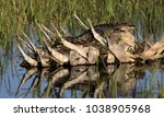 Sunny Alligator On Palm Tree
