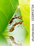 red ants team work in building home - stock photo