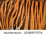 real skin texture of tiger | Shutterstock . vector #1038957076
