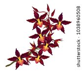 branch of cambria orchid with...