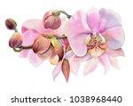 pink orchids. watercolor ... | Shutterstock . vector #1038968440