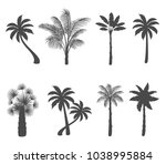 set of palm tree silhouettes on ... | Shutterstock .eps vector #1038995884