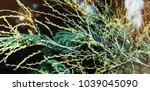fresh healthy bio background... | Shutterstock . vector #1039045090