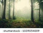 foggy woods  green landscape | Shutterstock . vector #1039054009