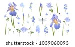 vector botanical set of blue... | Shutterstock .eps vector #1039060093