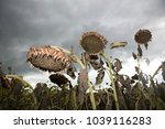 An Image Of Dried Sunflowers In ...