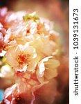spring flowers. sakura | Shutterstock . vector #1039131673