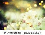 spring flowers. sakura | Shutterstock . vector #1039131694