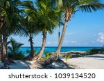 palm trees. beautiful tropical... | Shutterstock . vector #1039134520