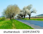 blossoming roadside cherry tree  | Shutterstock . vector #1039154470