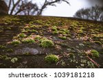 shingle roof covered in moss  | Shutterstock . vector #1039181218