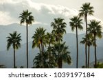 view of the palm trees in...   Shutterstock . vector #1039197184