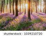 beautiful woodland bluebell... | Shutterstock . vector #1039210720