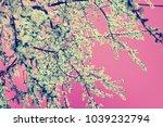 blossom tree over nature... | Shutterstock . vector #1039232794
