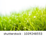 background of dew drops on... | Shutterstock . vector #1039248553