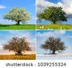 alone big tree in four seasons | Shutterstock . vector #1039255324