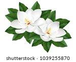 white magnolia flowers.... | Shutterstock .eps vector #1039255870