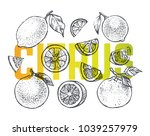 citrus set   hand drawn... | Shutterstock .eps vector #1039257979