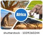 africa. journey through africa. ... | Shutterstock . vector #1039260244