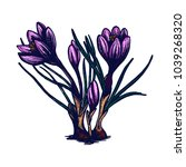 crocus hand drawn isolated... | Shutterstock .eps vector #1039268320