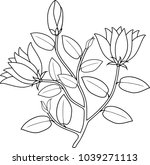 coloring page. plant with... | Shutterstock .eps vector #1039271113